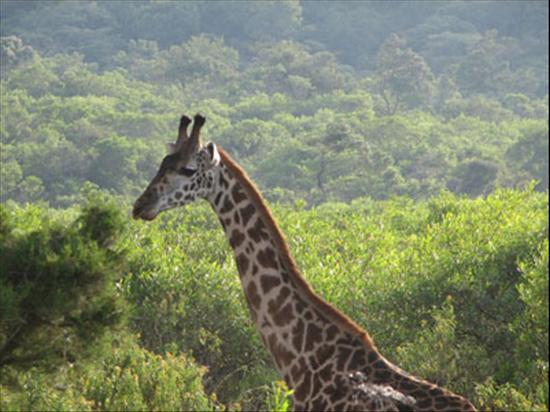 1day_arusha_nationalpark_400.jpg